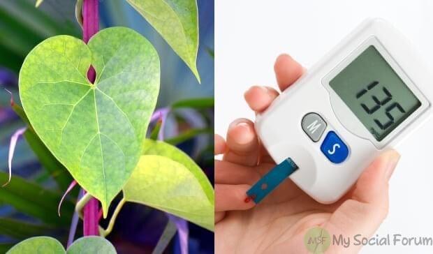 جانیں گلوئے کے پتوں کے 5 کرشماتی فوائد جو آپ کو معلوم نہیں۔ یہ شوگر کو کم کرنے اور دل کی بیماریوں کے لیے بہت مفید اور فاءدہ مند ہیں۔۔